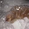 雪に埋まるクッキー
