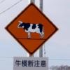 牛横断注意