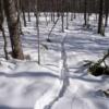 エゾシカの足跡を追跡