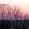 阿寒の森の朝焼け