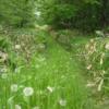 廃屋への小道:開拓生活研究所ブログ