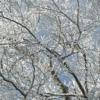 樹氷:開拓生活研究所ブログ