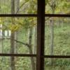 秋の森の窓