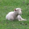 羊牧場:開拓生活研究所ブログ