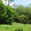 初夏、セミと野鳥の大合唱:開拓生活研究所