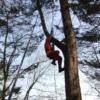 ツリークライミング(木登り):開拓生活研究所
